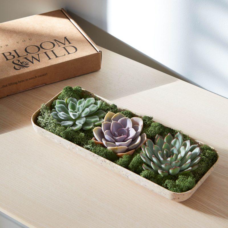 Housewarming gift ideas The Super Succulents