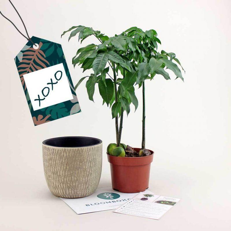 Bloom box plan subscription gardening gift idea