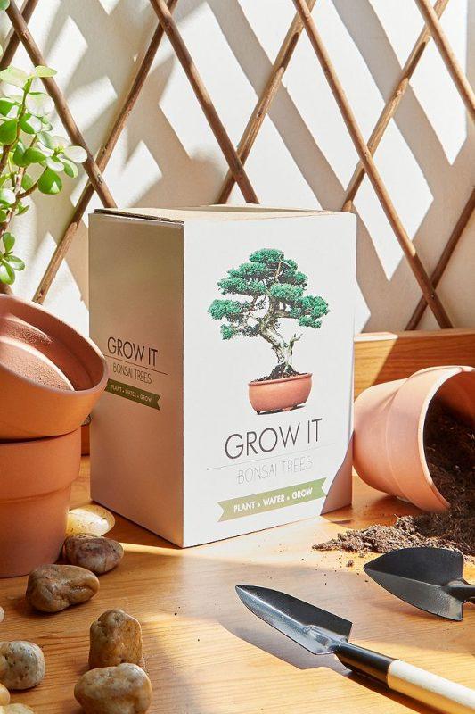 Grow your own bonsai tree kit