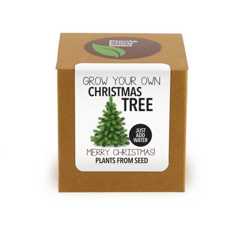 Grow your own Christmas tree gift