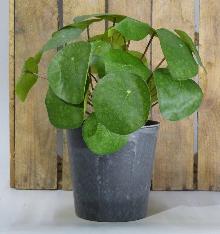 Faux Plant Gift Ideas Money Plant