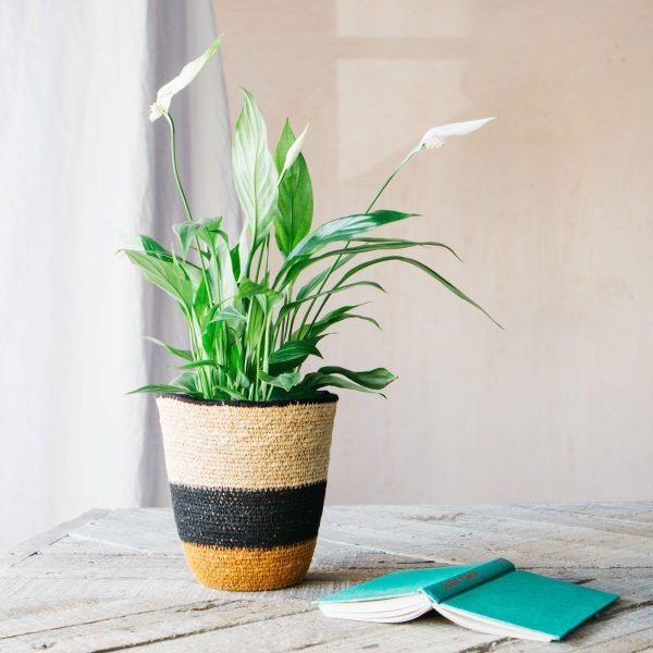 Natural Seagrass Basket Eco Friendly Gift Idea