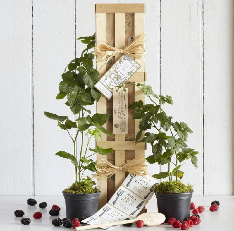 Grow Your Own Berry Jam Plant Gift Ideas