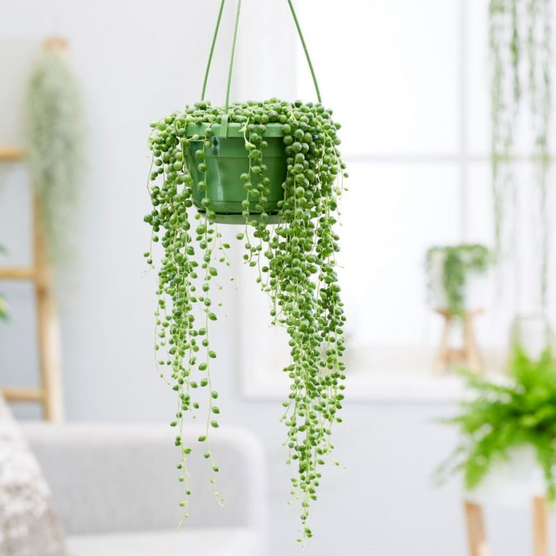 String of Beads with Pot