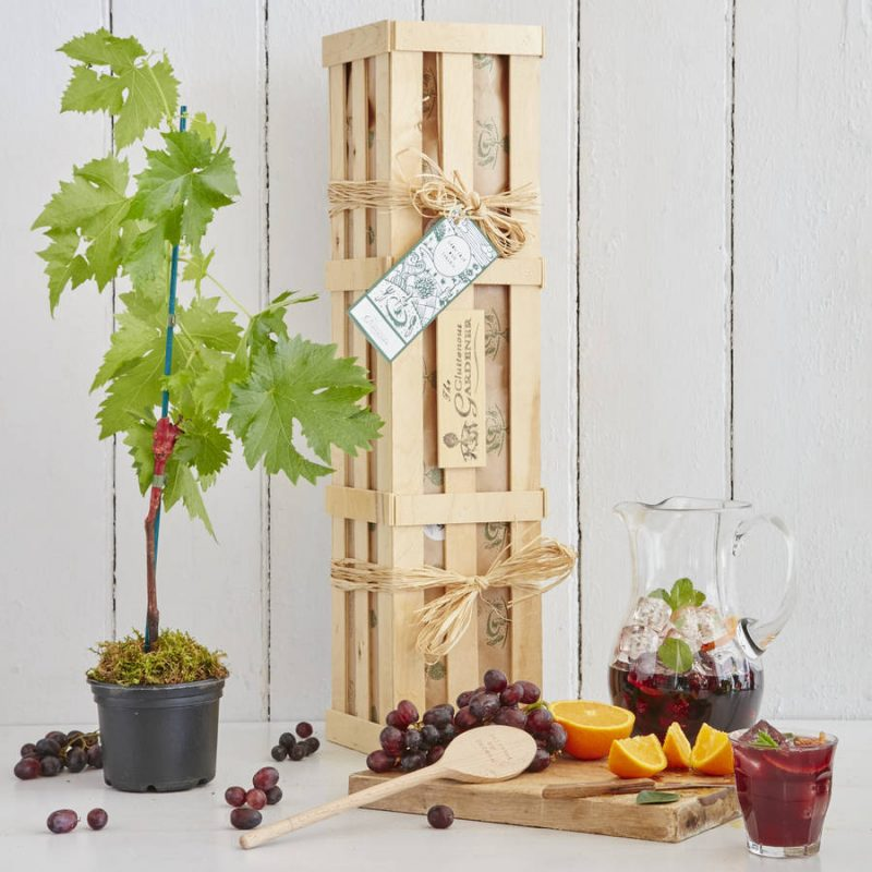 Sangria gift crate cocktail gift ideas