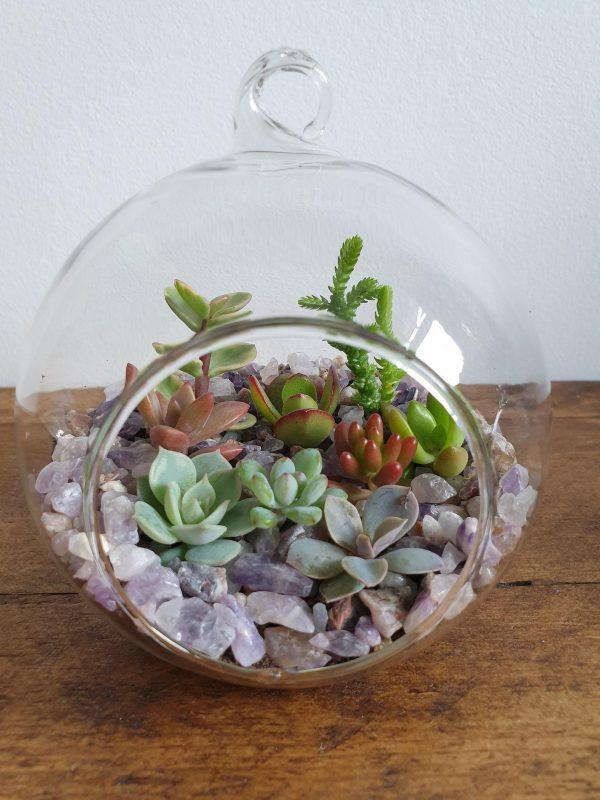 The Succulent Glass Terrarium