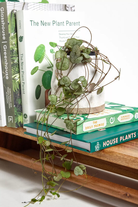 String of Hearts Plant Gift